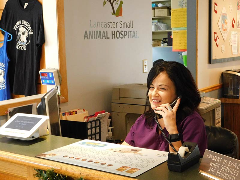 Lancaster Small Animal Hospital Payment Options